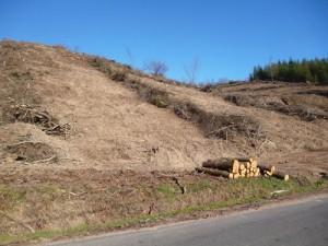 sylviculture durable: une forêt certifiée PEFC