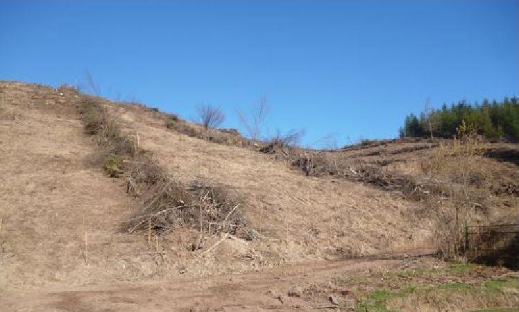 coupe rase de feuillus, andains perpendiculaires à la pente et plantation de douglas; nous avons la garantie de créer une érosion pérenne