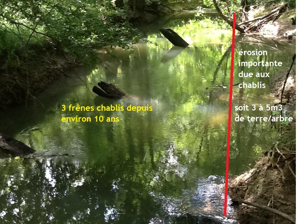 trois frênes tombés dans la rivière