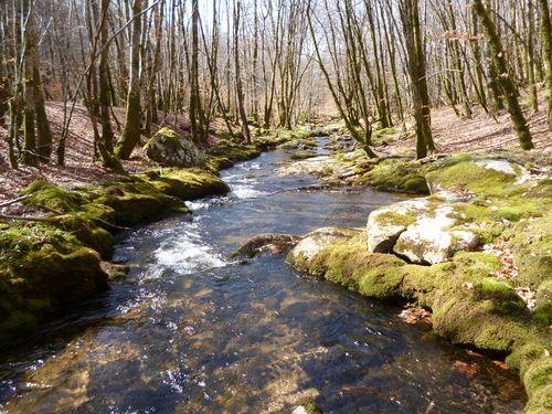 ruisseau en tête de bassin versant traversant des taillis