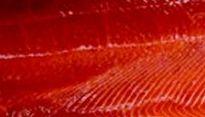 une chair rose-rouge: un gage de qualité ou un surdosage d'astaxanthine?