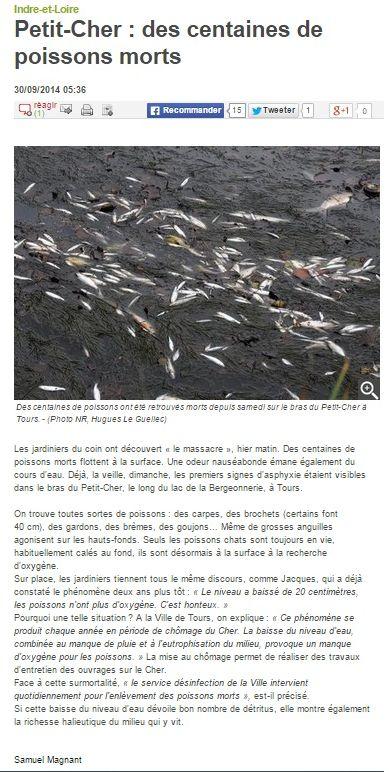 petit-cher_des centaines de poissons morts