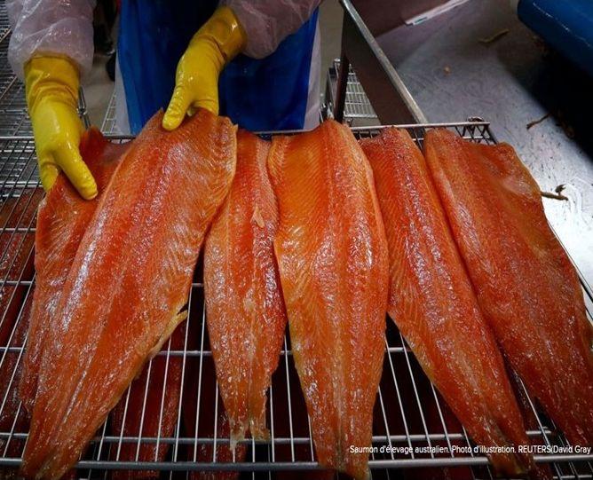 Déclin du saumon sauvage. Qui est responsable : les moulins ou le consommateur ?