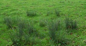 attention: 3 ou 4 joncs dans une prairie suffisent pour accéder au statut de zone humide.