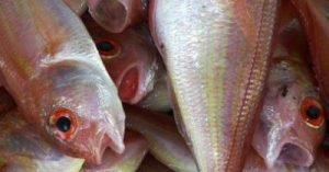 poissons-mondialisation